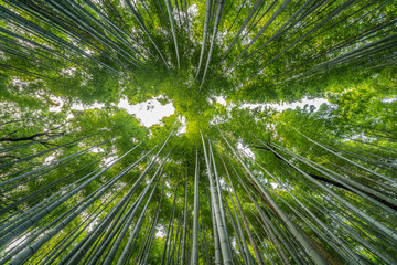 Early morning Sky view from Sagano-Arashiyama Bamboo forest, Kyoto, Japan