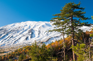 Etna landscapes: snowy volcano and pine trees