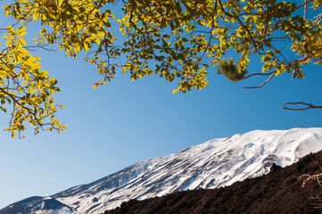Mount Etna, Italy: snowy volcano and a beech wood