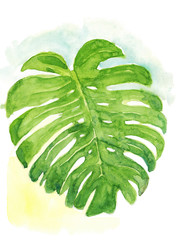 Watercolor hand drawn sketch illustration of green monster leaf on an abstract background art