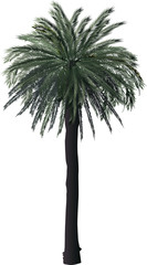 single high green palm tree on white
