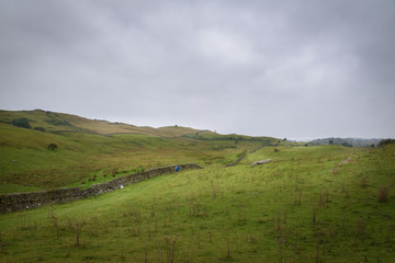Hiker walking the Dales Way in the green and vast moorlands of England in moddy weather