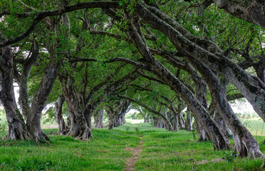 Trees in forest on Mauritius Island