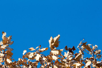 Brown Autumn Leaves and a Blue Sky 2