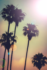 Retro Style Palm Trees With Lens Flare