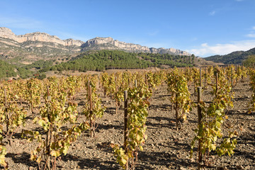 vineyards in autumn near the village of La Vilella Alta, in the background the mountain of Montsant, El Priorat, Tarragona, Spain