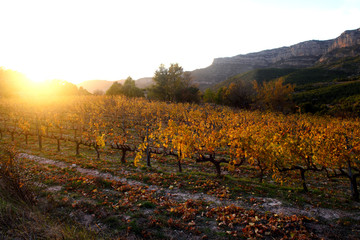 Sunset in the vineyards of the Priorat near de village of Morera de Montsant, Tarragona province, Catalonia, Spain
