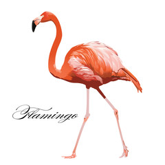 Flamingo tropical exotic coral bird. Vector isolated Illustration.