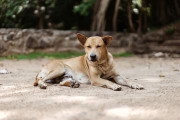 Straßenhund im Sand