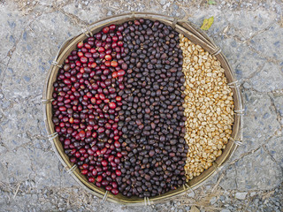 coffee beans berries drying natural process coffee beans