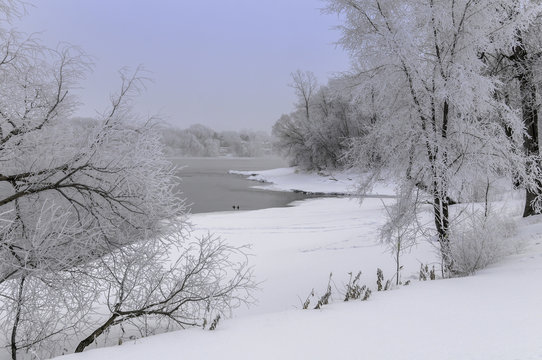 Snow covered tree with open water on Mississippi  river