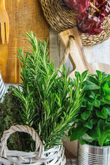 Rural Kitchen Interior White Plank Wood Wall Hanging Cutting Boards Linen Towel Utensils String of Dried Peppers Fresh Herbs Rosemary Thyme Mint in Basket