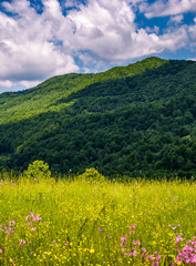 grassy pasture with wild flowers in mountains. beautiful summer scenery on a fine weather day