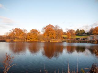 beautiful stunning glowing golden autumn trees lakeside landscape