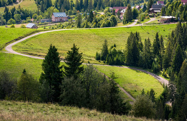 winding road to village through grassy hillside with spruce forest. lovely early autumn countryside landscape