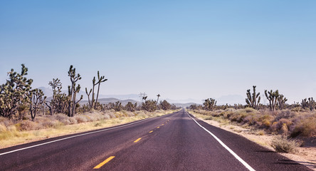 Foto op Canvas Route 66 Road in the Joshua Tree National Park, color toned picture, travel concept, USA.