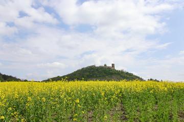 Burg Gleichen, Thüringen, Rapsfeld