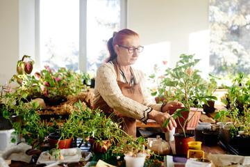 Grandma botanist florist, caring for house plants