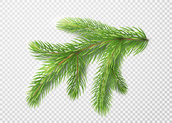 Fir branch. Christmas tree, pine needles isolated on transparent background