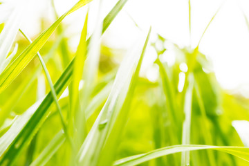 Green grass on bright background