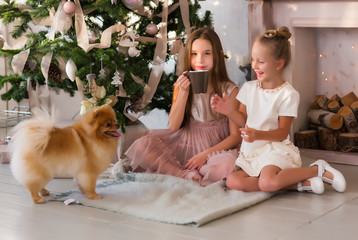 Christmas happy child with puppy. Winter holiday, dog year. Xmas party celebration, childhood. New year of dog, small girl and dog in present box.