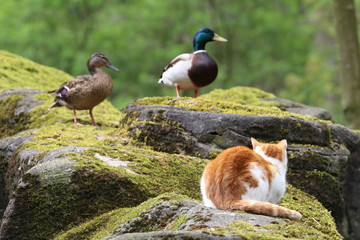 A cat is looking at birds