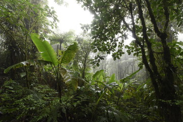 Rainforest - Jungle - Regenwald Monteverde - Costa Rica