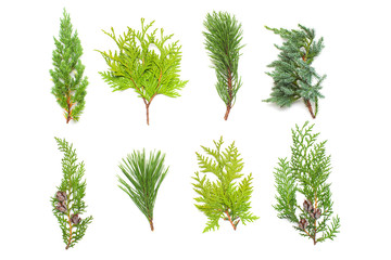 A collection of branches pine, juniper, thuja and cones isolated on white background. Coniferous trees. Winter. Christmas card. Flat lay, top view