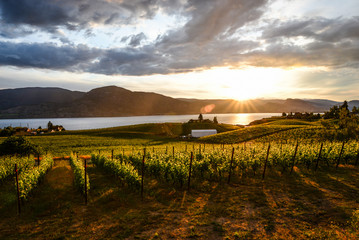 Sunset in the Vineyards in Penticton , okanagan valley Canada Fototapete