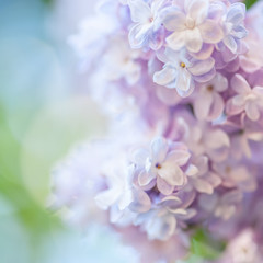 Wall Mural - Lilac flowers background