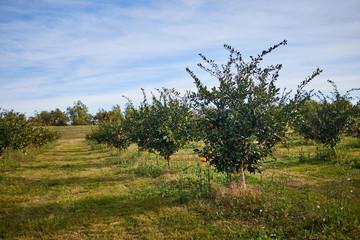 Fruit orchard on a farm