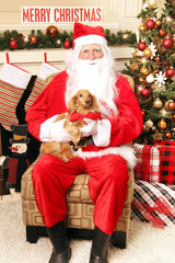 Santa Claus holding a pet dachshund dog on his lap. Christmas tree and fireplace behind him.