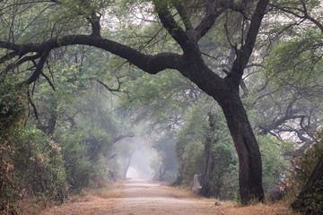 Indian Forrest