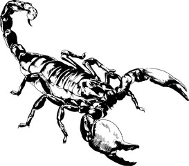 attacking the Scorpion with the sting striker is drawn in ink freehand sketch tattoo