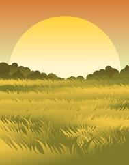 grass nature scene