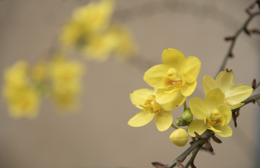 Yellow flowers are the background or wallpaper.