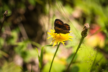Butterfly on flower during summer