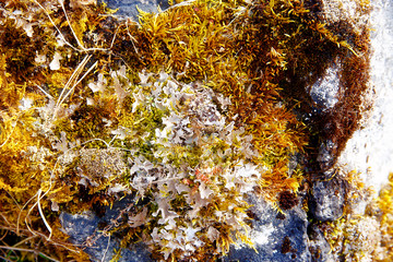 moss on a rock. Color structure background.
