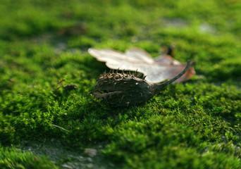 nasiono buku na mchu