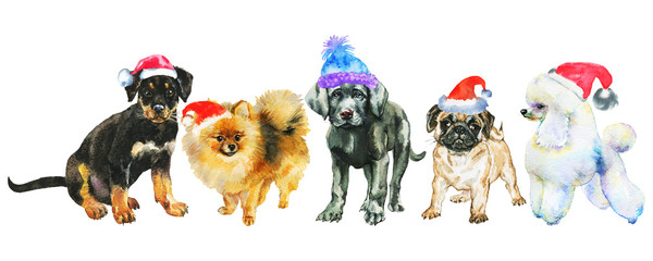 Watercolor dogs in Christmas hats. Painting New year banner on white background. Hand drawn cute pets