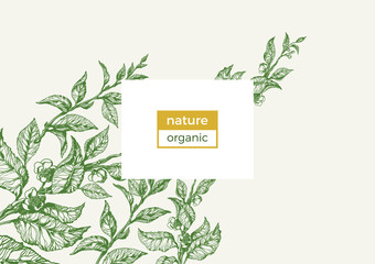 Vector nature template. Vintage floral illustration