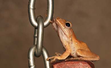 Frog posture on the white wall