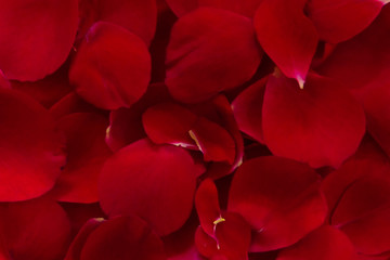 Rose petals red colour closeup background wallpaper