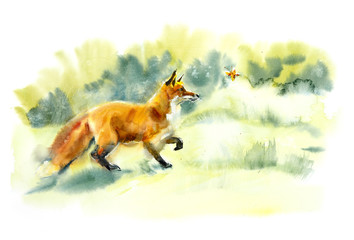 Red fox playing with butterfly. Wild animal. Watercolor hand drawn illustration