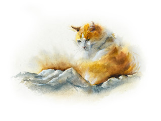Fluffy domestic cat. Watercolor hand drawn illustration