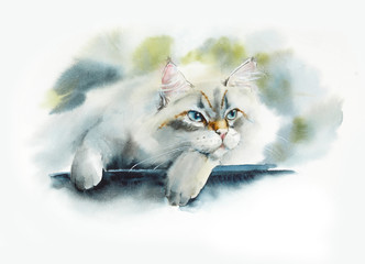 Domestic cat. Siberian. Walk on the garden. Watercolor hand drawn illustration