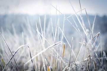 hoarfrost on the grass