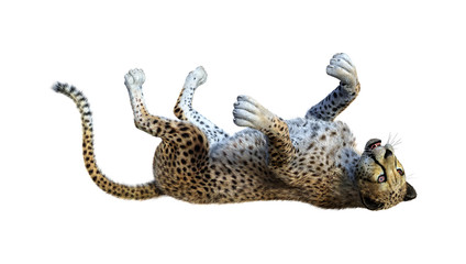 3D Rendering Big Cat Cheetah on White