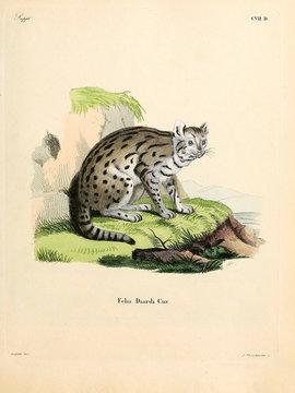 Mammals of the family Felidae.