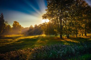 sun rays sunrise trees